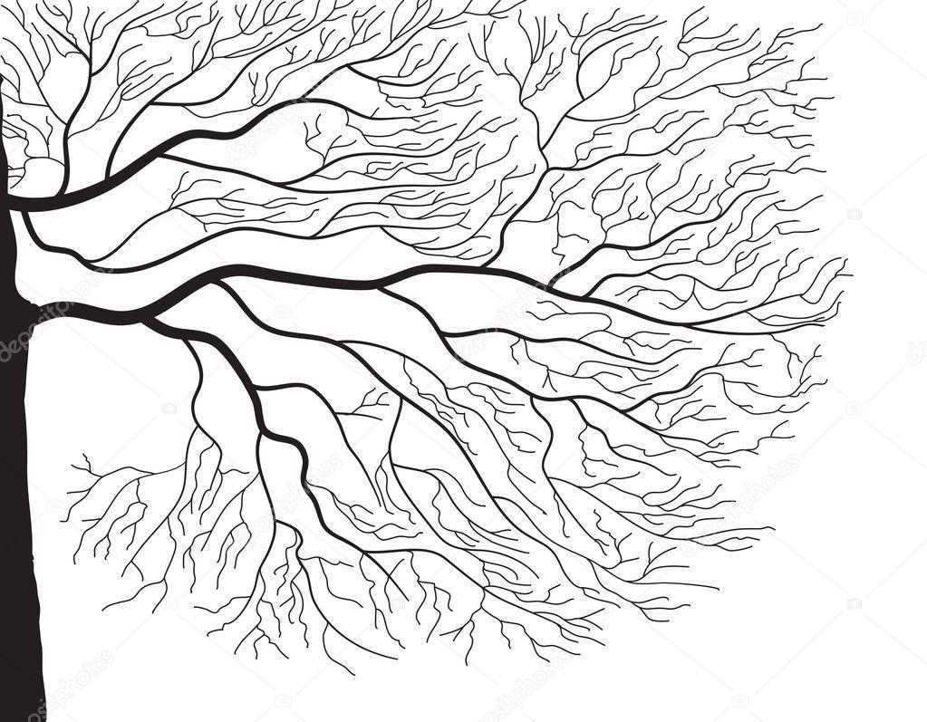 Tree silhouette on white