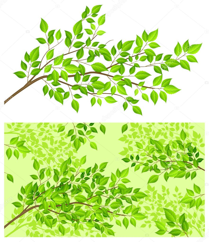 Branch tree with green leaf