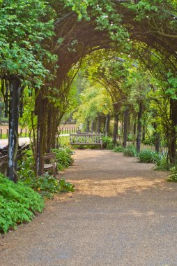 Green Archway in Hyde Park, London, UK