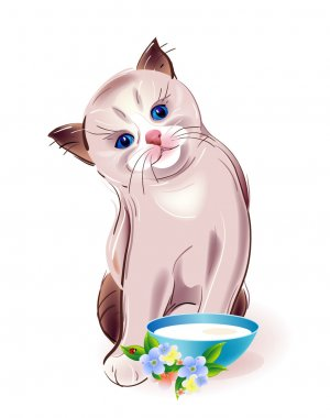 Eating thai kitten