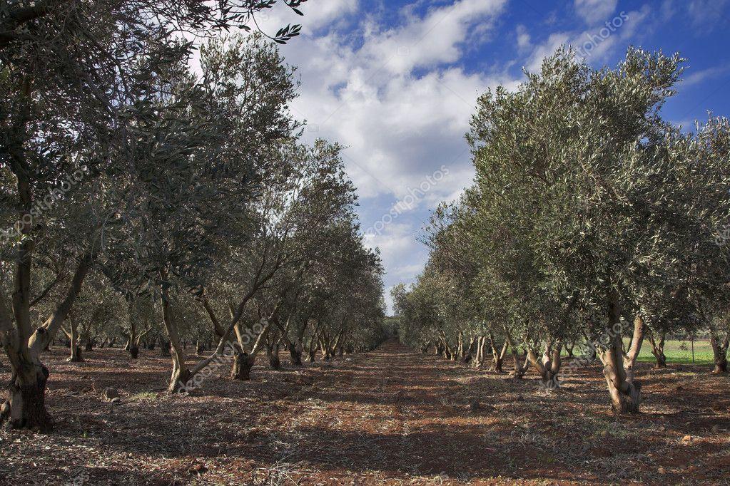 Winter in Israel.
