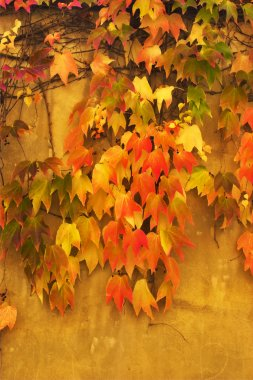 Autumn leaves on walls