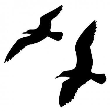 Vector silhouette of the sea gull on white background
