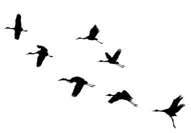 "Картина, постер, плакат, фотообои ""векторные силуэты летающих кранов "", артикул 5522030"