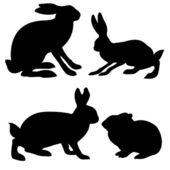 Fotografie Hasen und Kaninchen