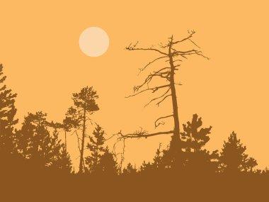 Dry tree in wild wood