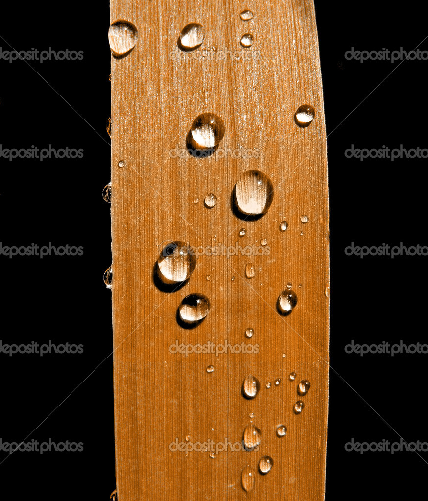 Dripped rain on sedge
