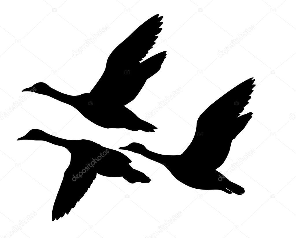 Векторный силуэт летающих уток на белом фоне — Векторное ...