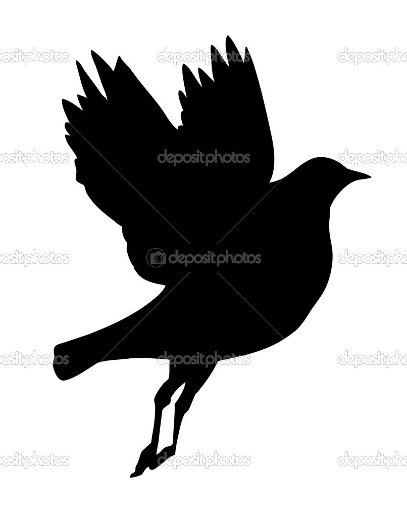 vector silhouette flying birds on white background — Stock ...