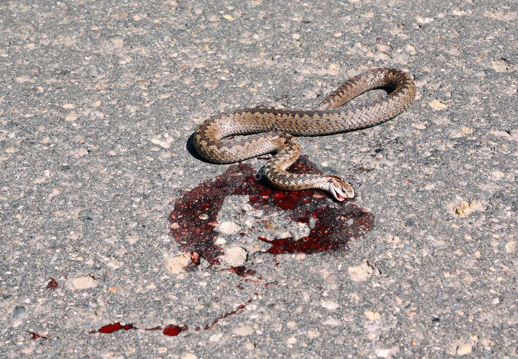 К чему снится убивать змею мужчине