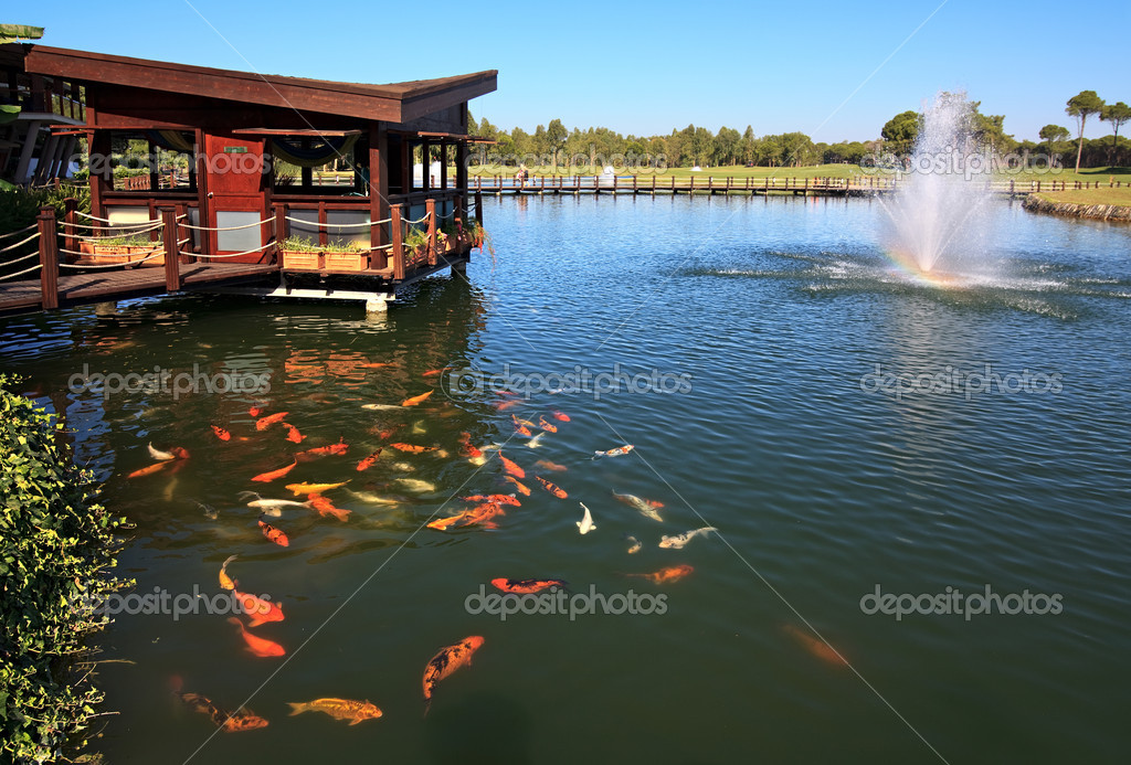 Laguna artificial con peces y fuente fotos de stock for Como hacer una laguna artificial