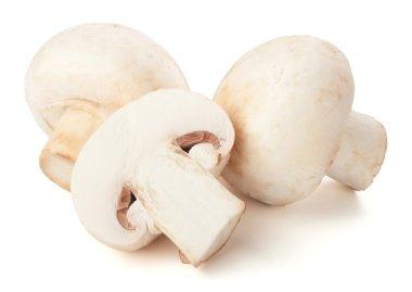 Champignon mushrooms on white backround