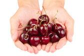 Fényképek Vörös érett cseresznye a kezét, mint fehér háttér