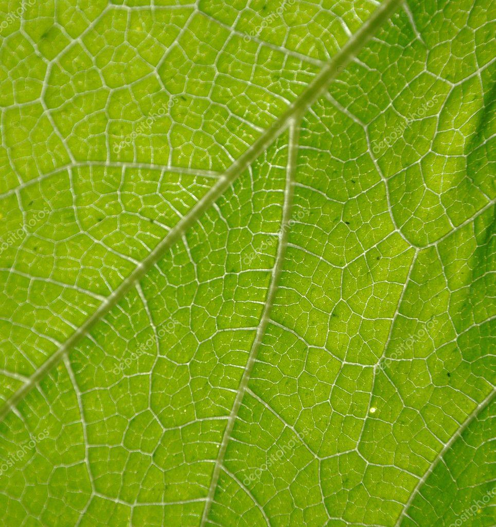 Sfondo Verde Natura Foto Stock Yuriyvlasenko 6133348