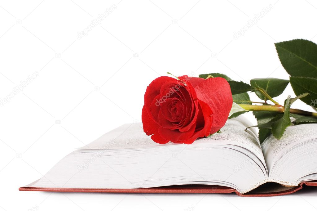 Beautiful red rose on the book