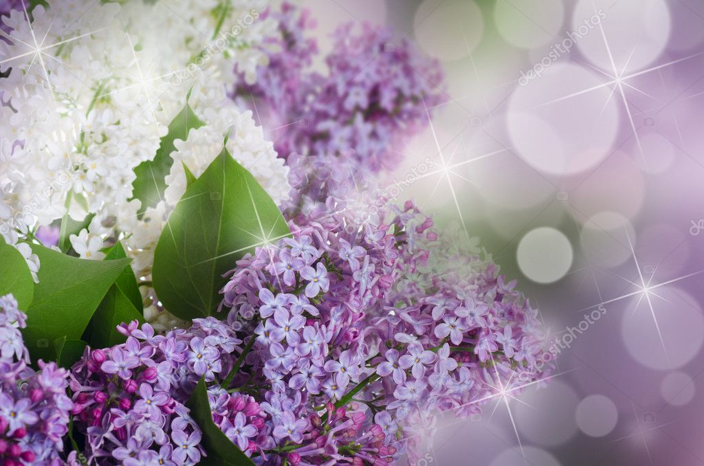 The beautiful lilac on a background