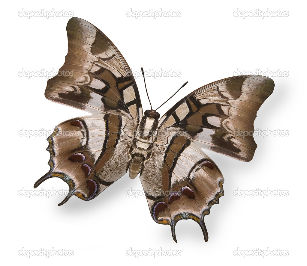 Bright picture of beige tropical butterfly isolated on white