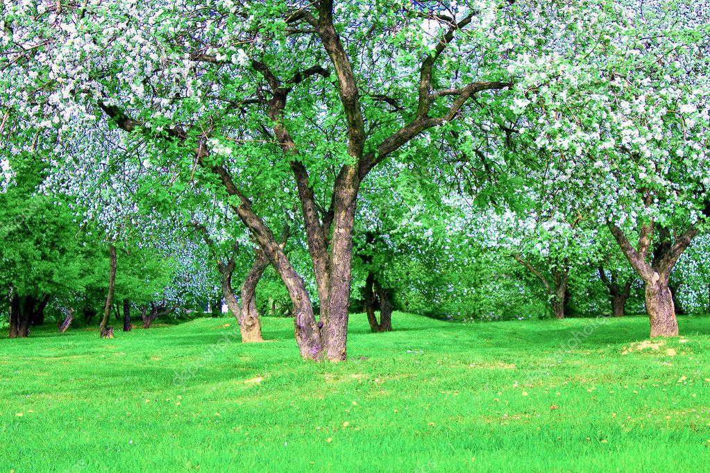 Bomen In Tuin : Bloeiende apple bomen tuin in het voorjaar van u stockfoto