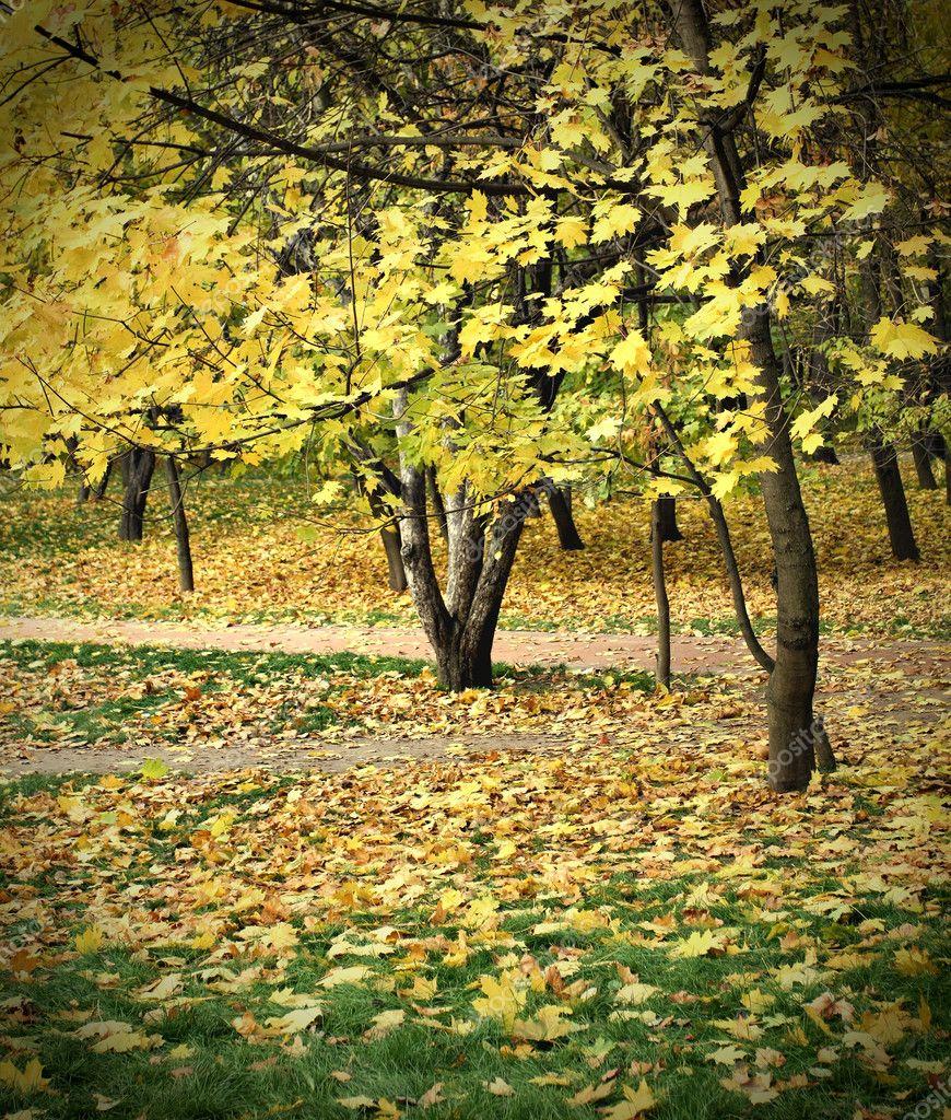 Bright fall season