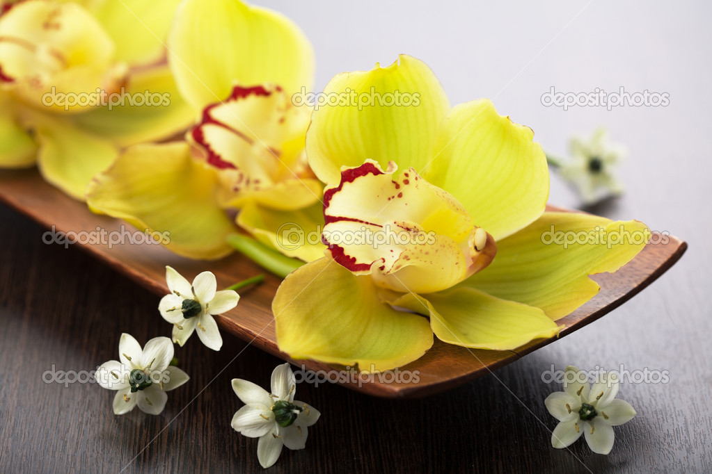 Orchid flowers in wooden bowl