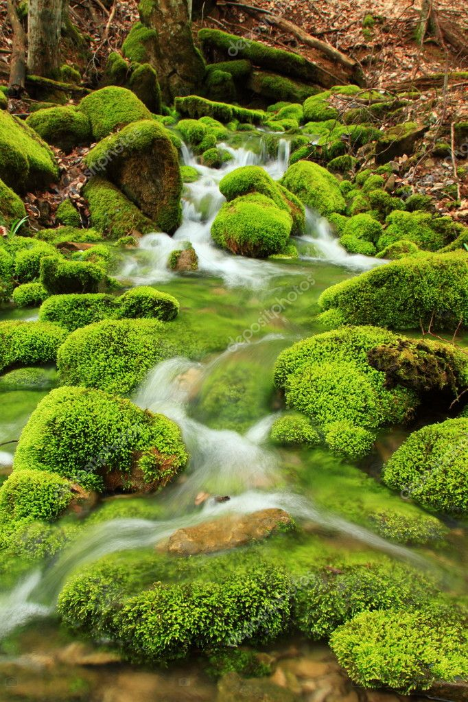 Mountain stream, mossy stones