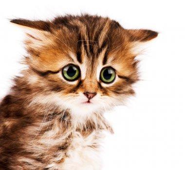 """Картина, постер, плакат, фотообои """"милый котенок"""", артикул 5763908"""