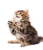 Fotografie süße Kätzchen