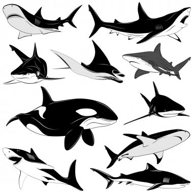 Set of various sharks, tattoo