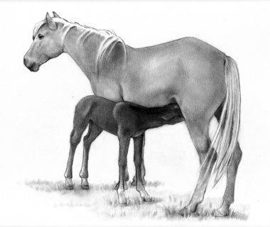 Pencil Drawing Of Mother Horse and Foal