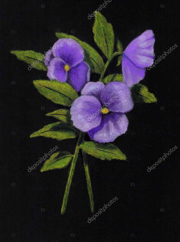 https depositphotos com 5762771 stock photo purple pansies on black in html