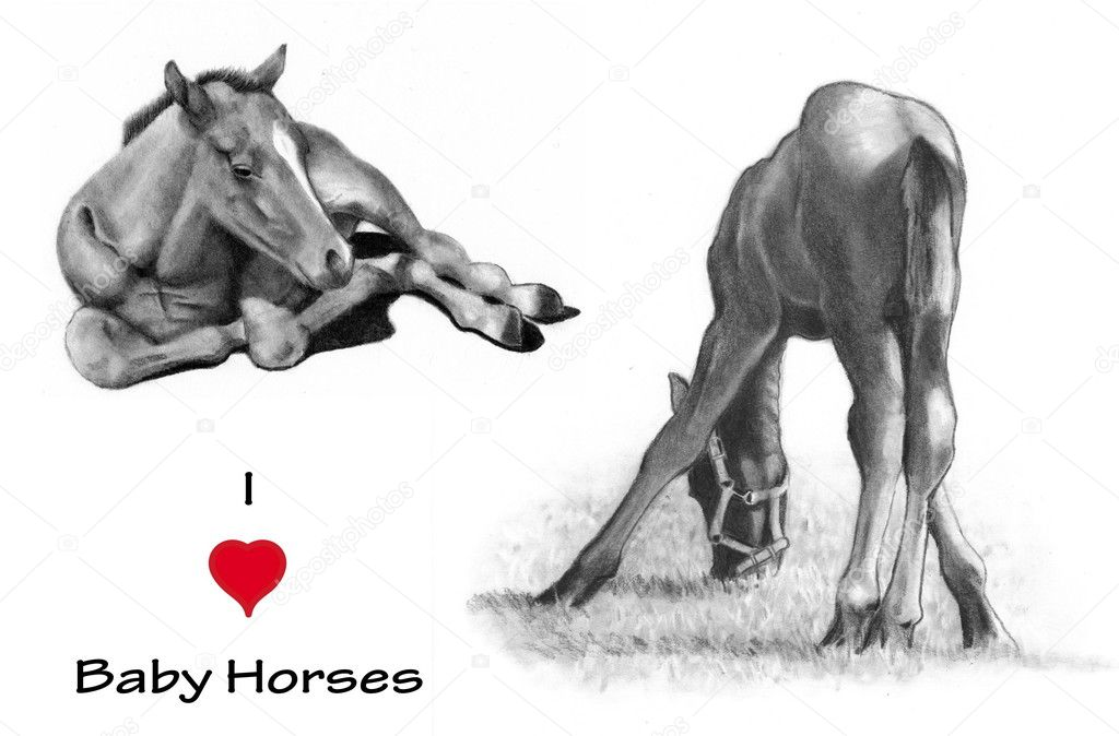 Drawings Of Baby Horses I Love Heart Baby Horses Pencil Drawing Stock Photo C Joyart 6071888