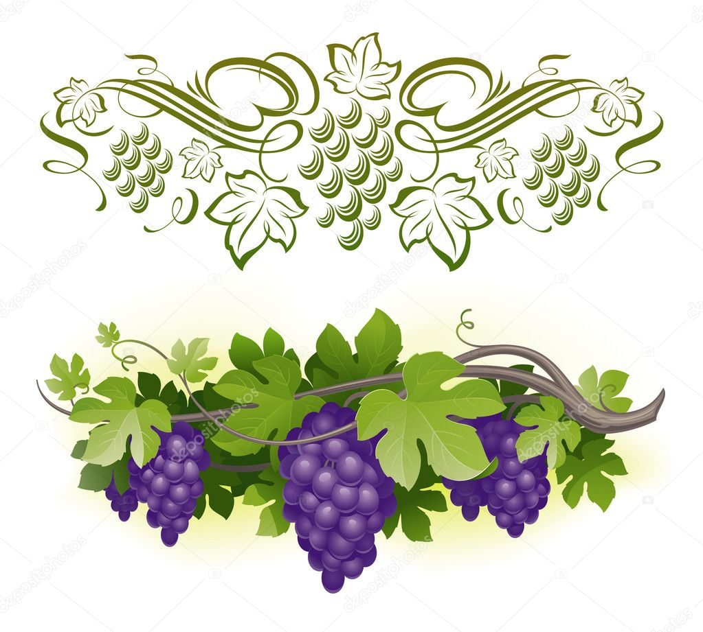 Ripe grapes on the vine & decorarative calligraphic vine