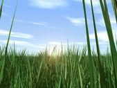 Photo Grass  sky