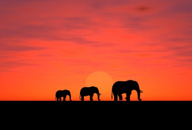 Elephants on a sundown