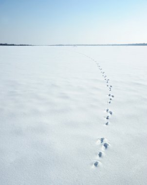 Traces of a hare on a snow
