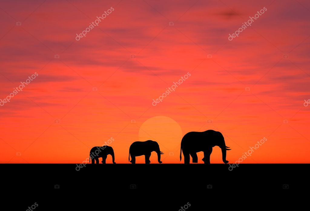 Elephants on a sundown