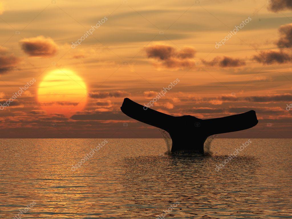 Показ фильма и концерт«Дуэт с китом»