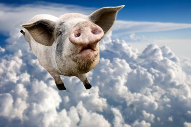 A pig flying through the clouds in the sky stock vector