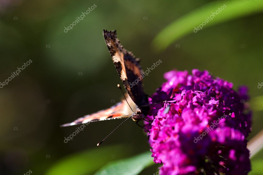 Buttefly on Purple Plant