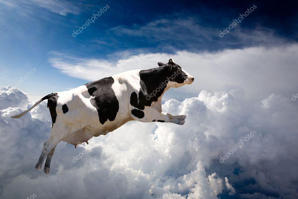 Dos vaques marxen volant d'una granja de Vic