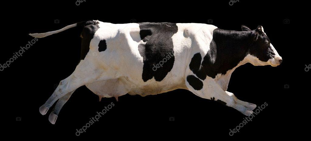 Flying Cow Stock Photo Simplefoto 5720231