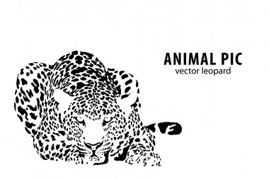 Vector illustration of a leopard on white background stock vector