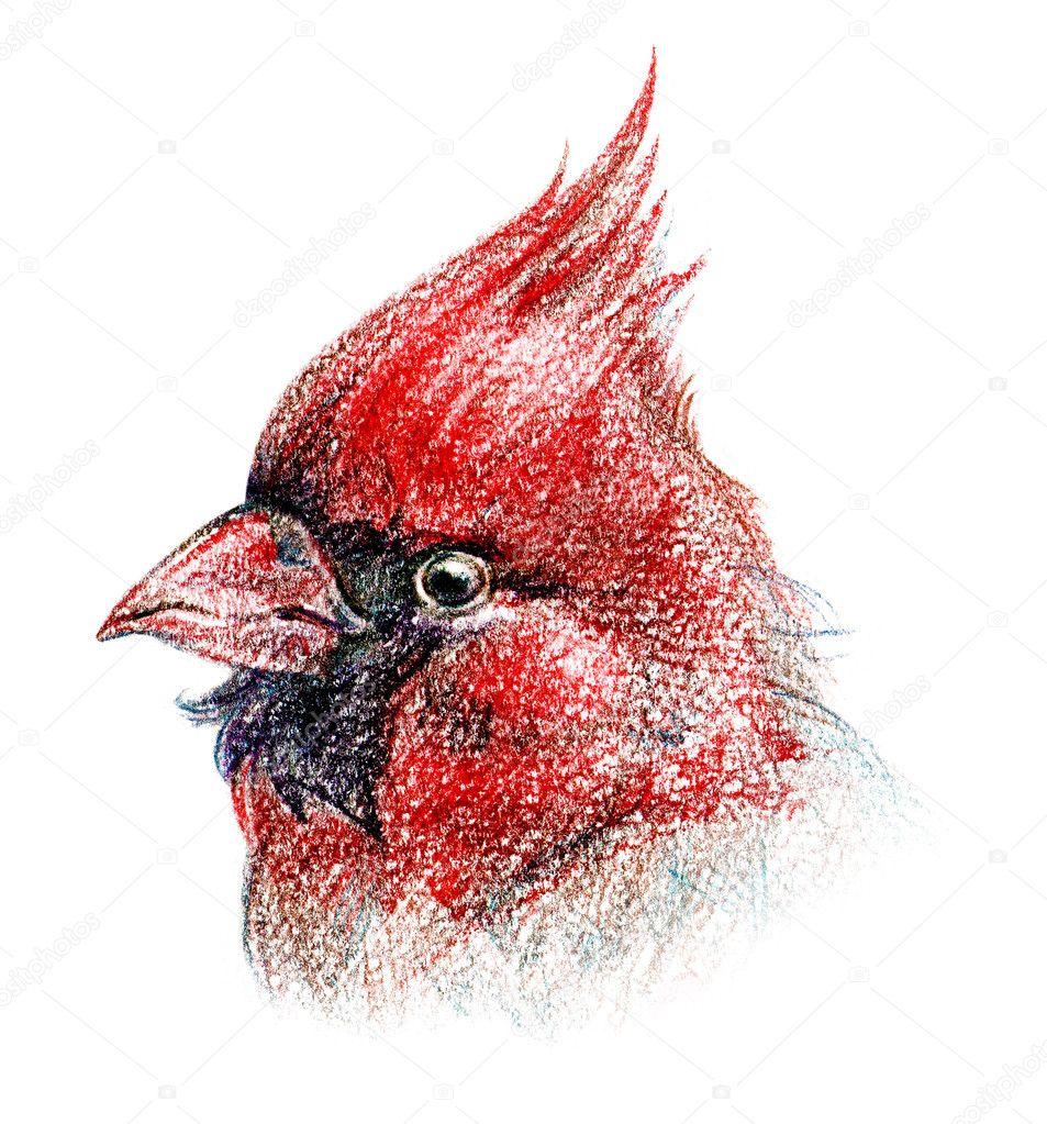 Bird pencil drawing art stock image