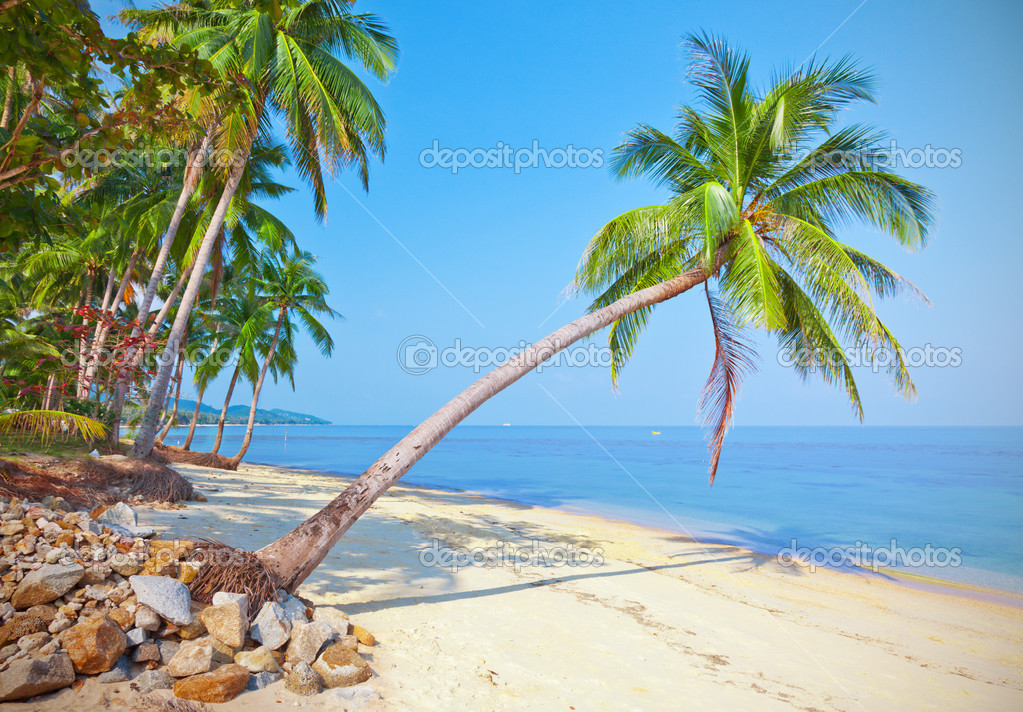 https://static6.depositphotos.com/1003372/539/i/950/depositphotos_5399032-stock-photo-beach-with-coconut-palm-tree.jpg
