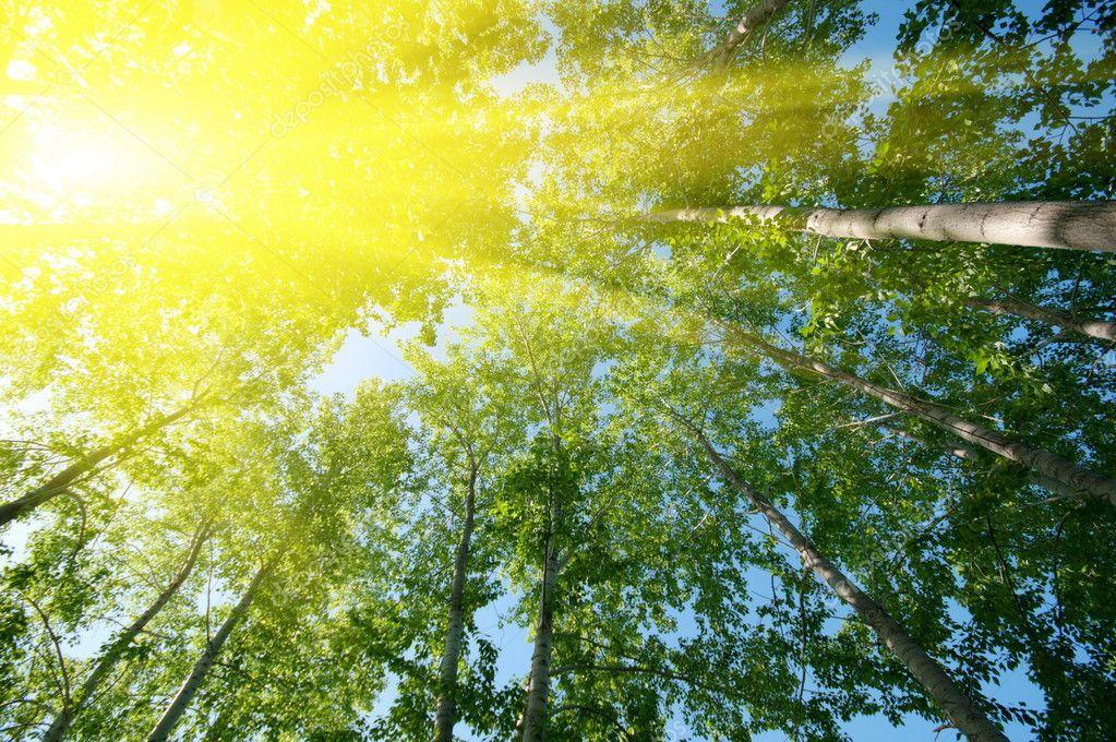 Sun over foliage