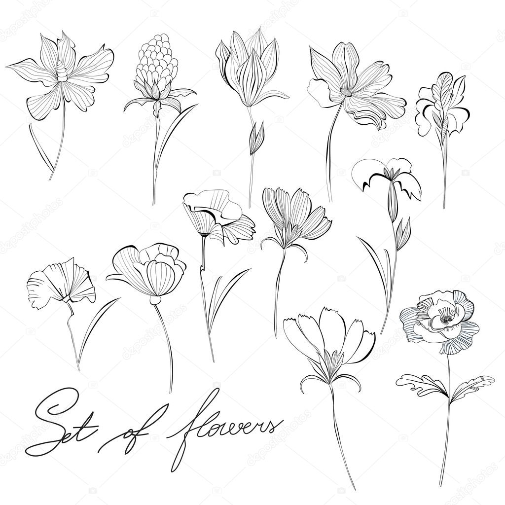 Скетчи цветы