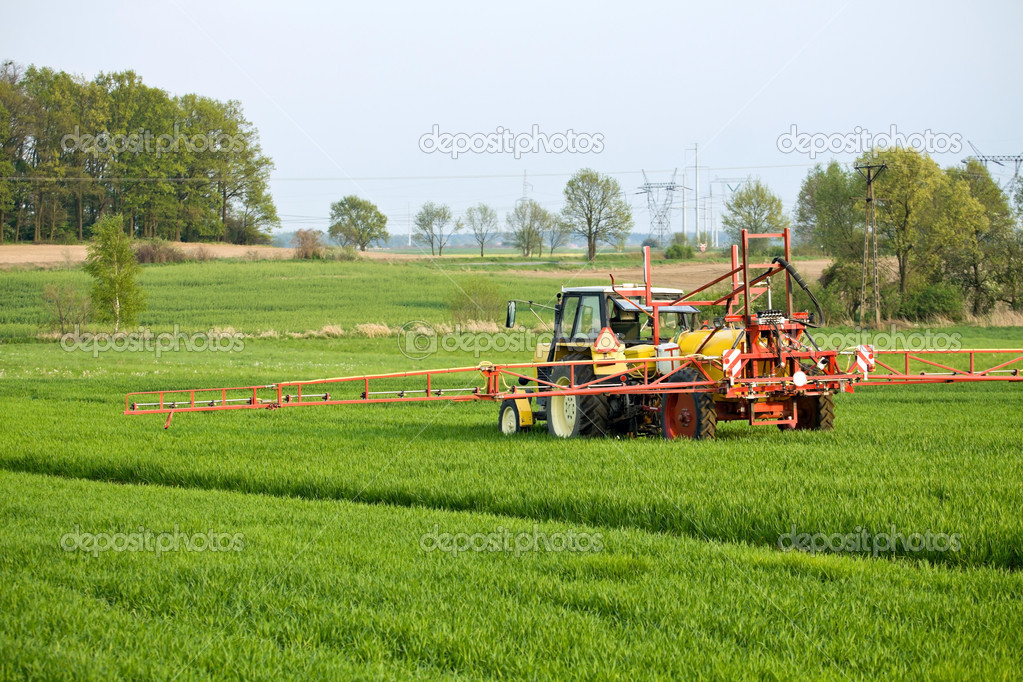 Tractor spraying green field on farm