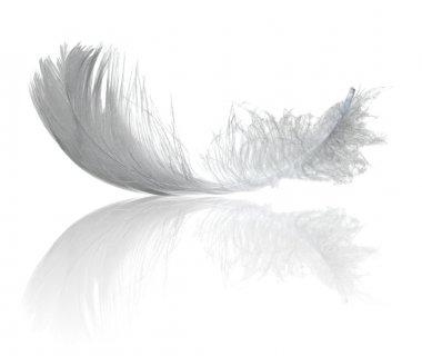 Light feather reflection