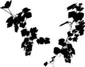 Fényképek két szőlő ágai