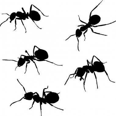 five ant silhouettes